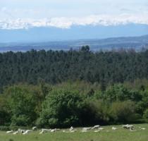 vue pyrenees