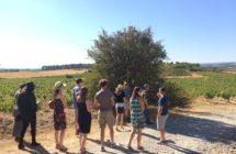 Wine Tour vignes
