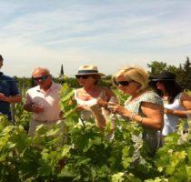 la visite de vignobles et dégustations de vins